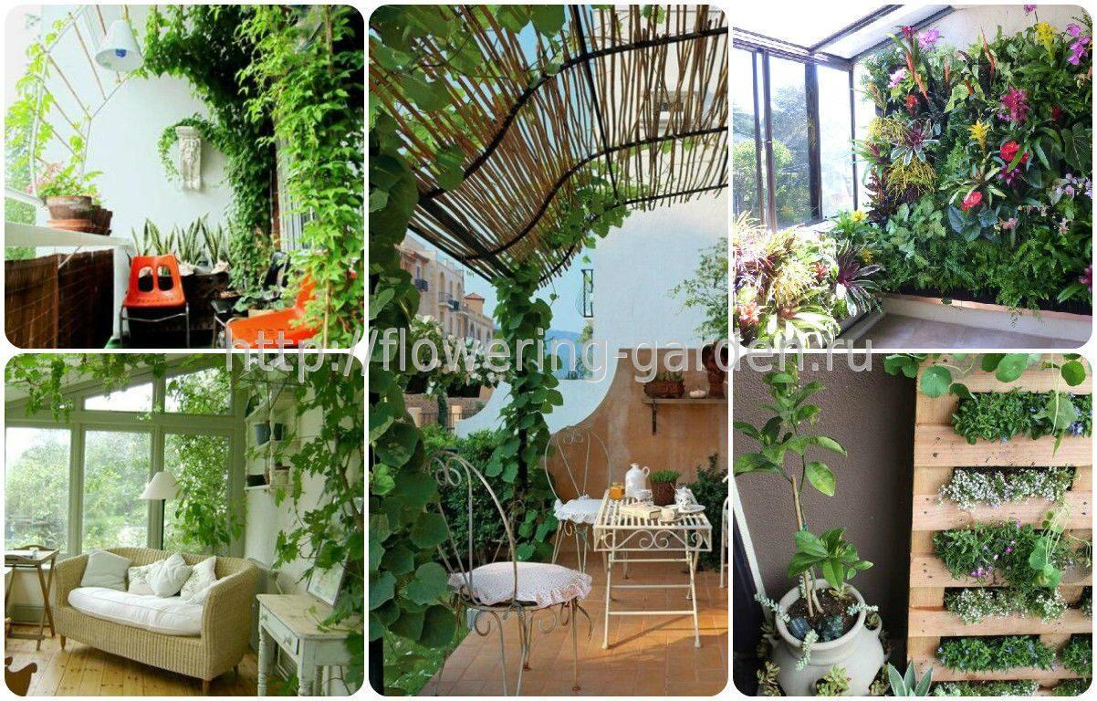 Растения для лоджий + фото.
